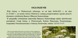 barszcz sosnowskiego